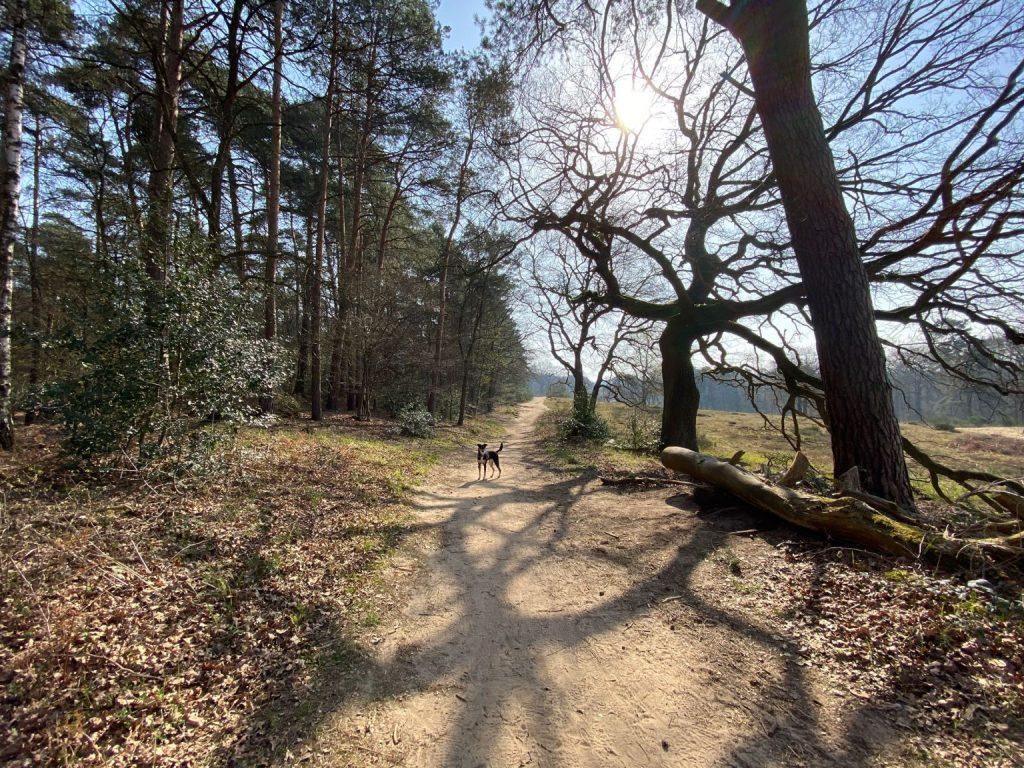 Fliegenberg Tour Wahner Heide - Walk & Wonder