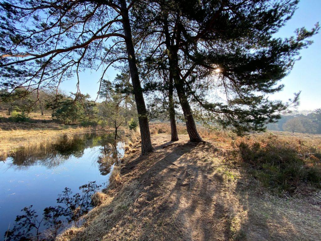 Tümpel am Fliegenberg - Wahner Heide - Walk & Wonder