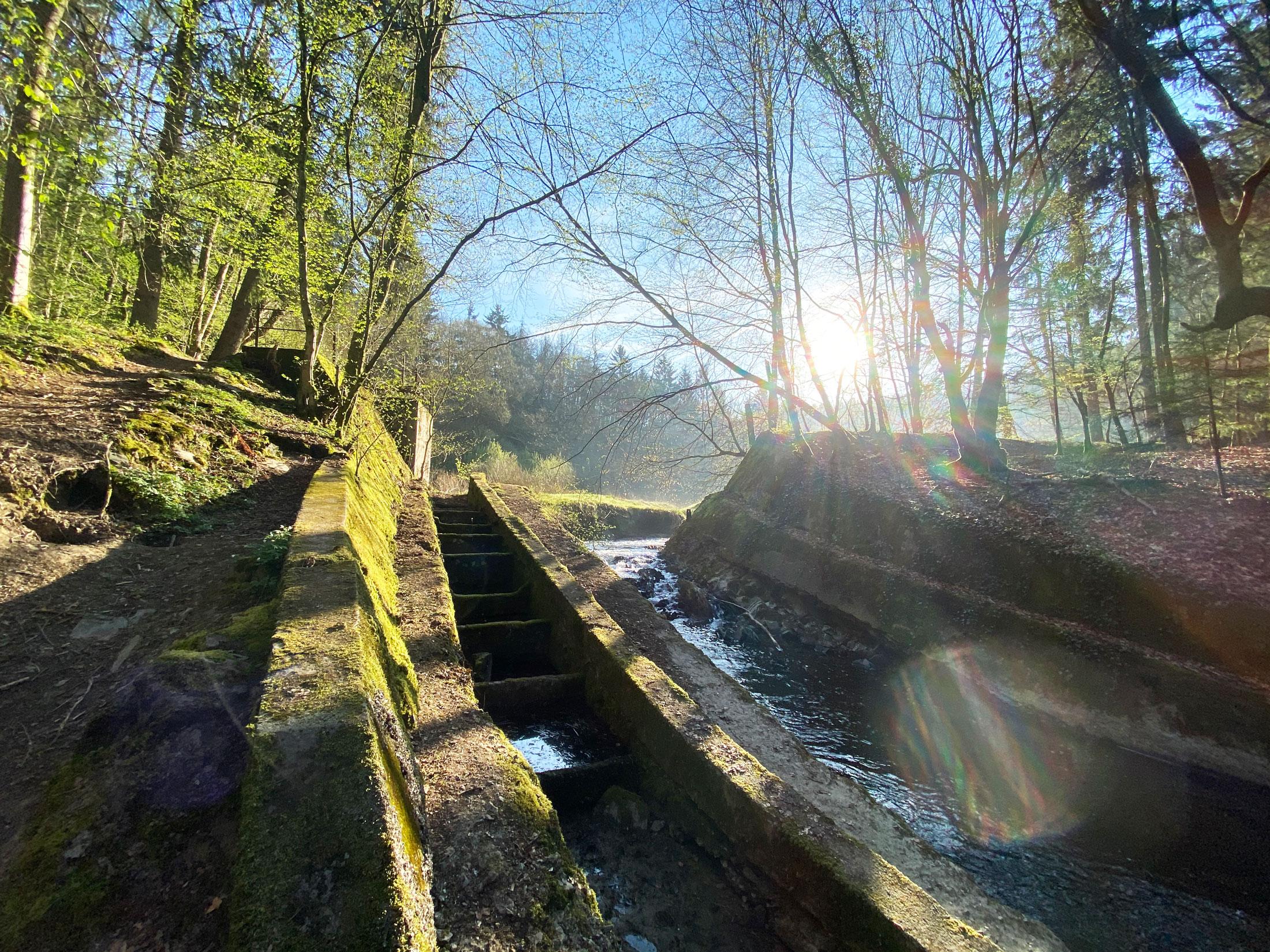 Burscheid Eifgenbachtal Wanderung - Walk & Wonder