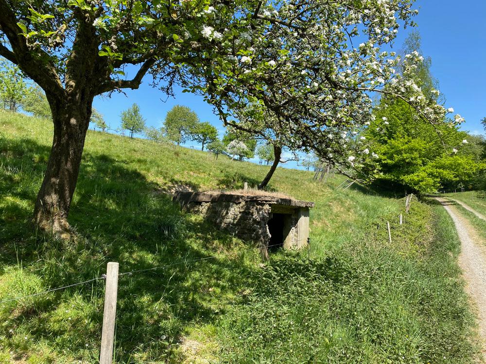 Wahnbachtalsperre Pinn - Walk & Wonder