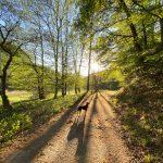 Entlang des Weltersbachs in Leichlingen - Walk and Wonder