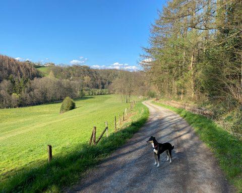 Naafbachtal Lohmar - Walk and Wonder