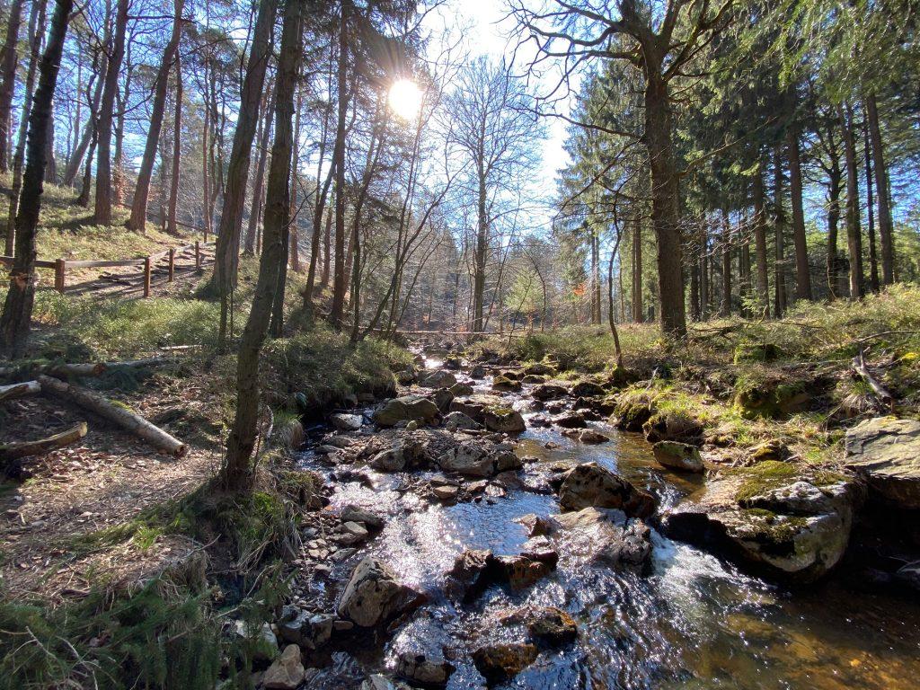 Eifel Wanderung Struffeltroute - Walk and Wonder