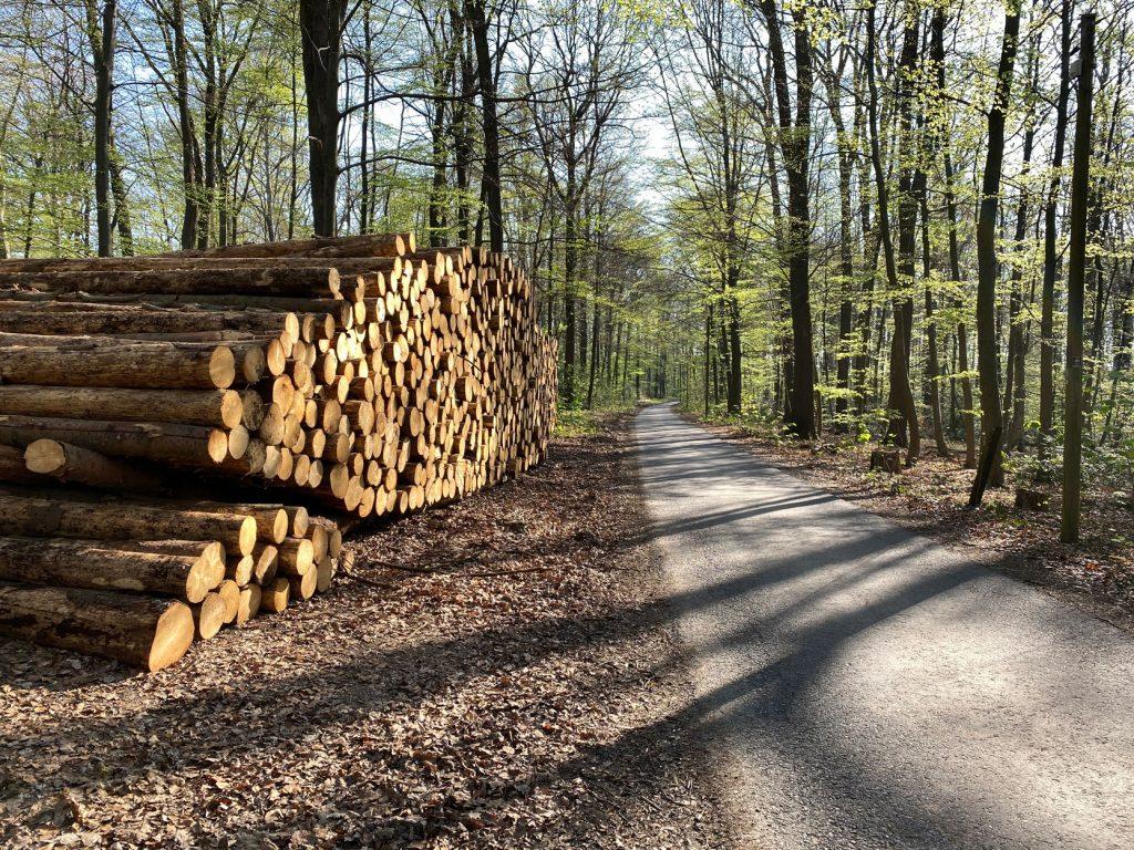 Odenthal Waldrunde um den Altenberger Dom - Walk and Wonder