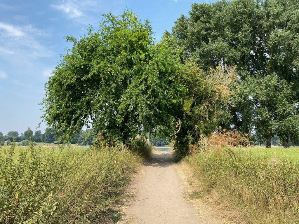 Düsseldorf - Auenlandschaft der Urdenbacher Kämpe - Walk & Wonder