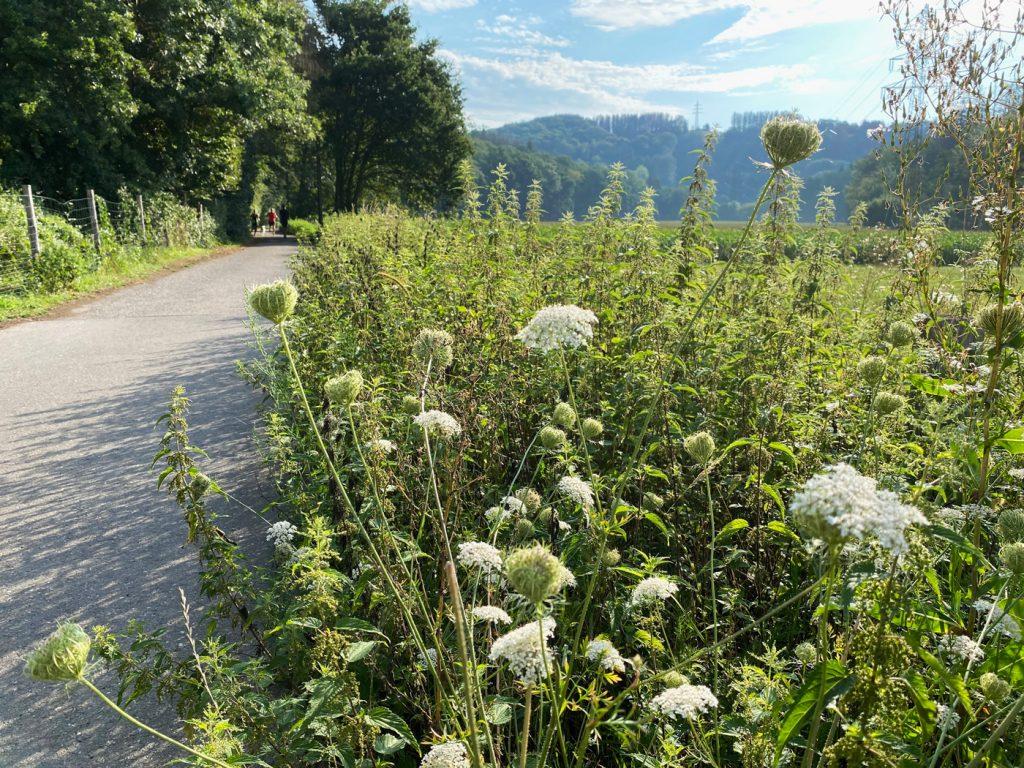 Odenthal Altenberg - Wanderung in die Aue - Walk & Wonder