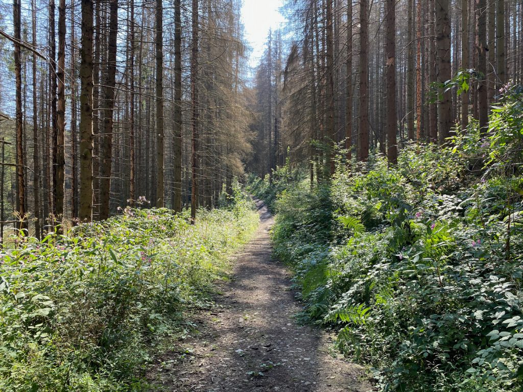 Wanderung in Odenthal - Altenberg - Walk and Wonder