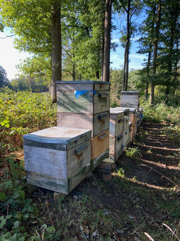 Bienenstöcke Liederweg - Walk and Wonder