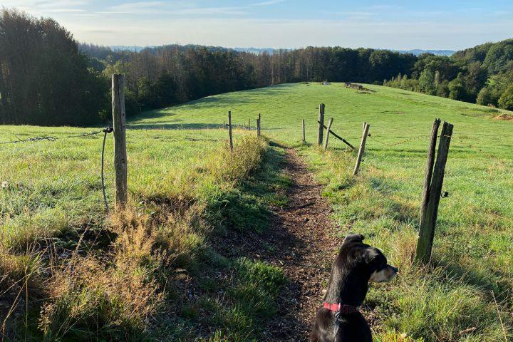Wanderung Hohkeppel - Walk and Wonder