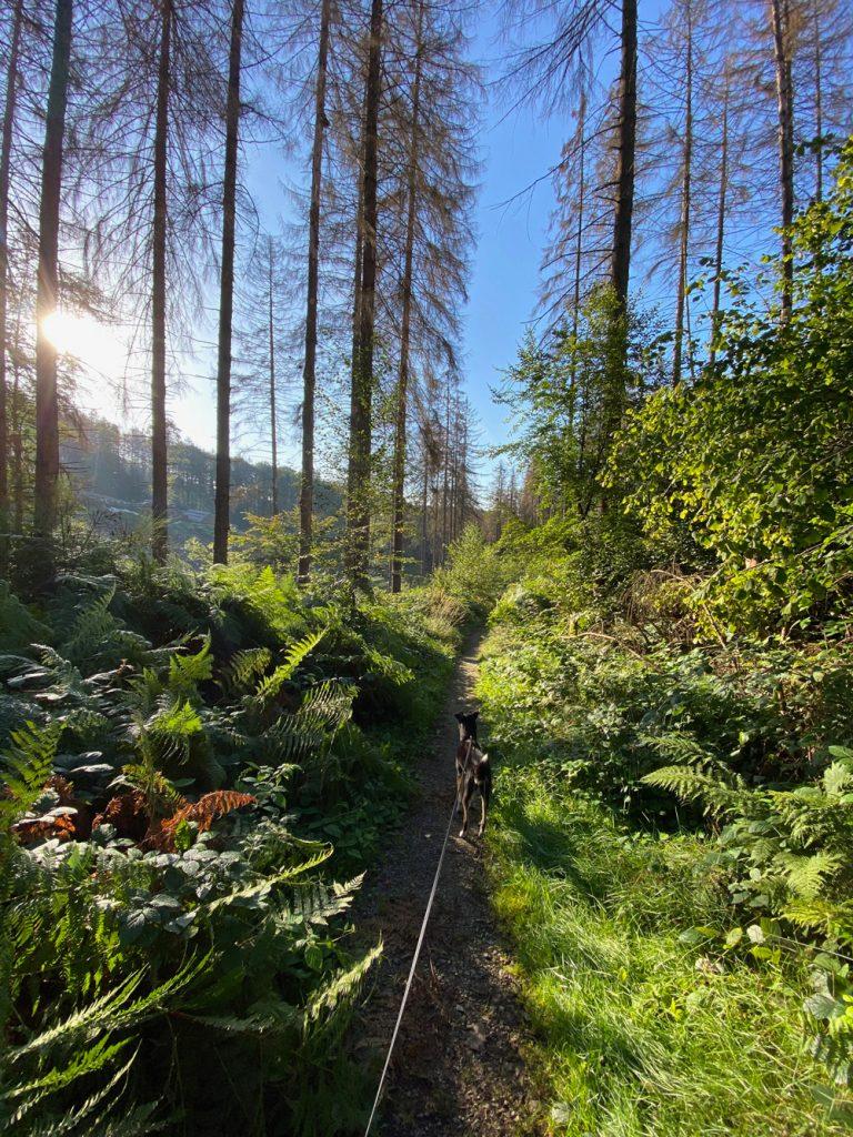 Lindlar Hohkeppel Wanderung - Walk and Wonder