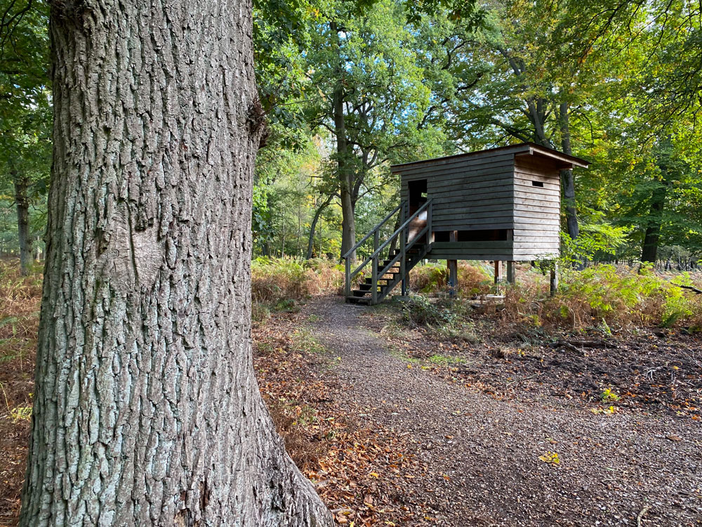Hirschkäferroute Diersfordter Wald Wesel - Walk and Wonder