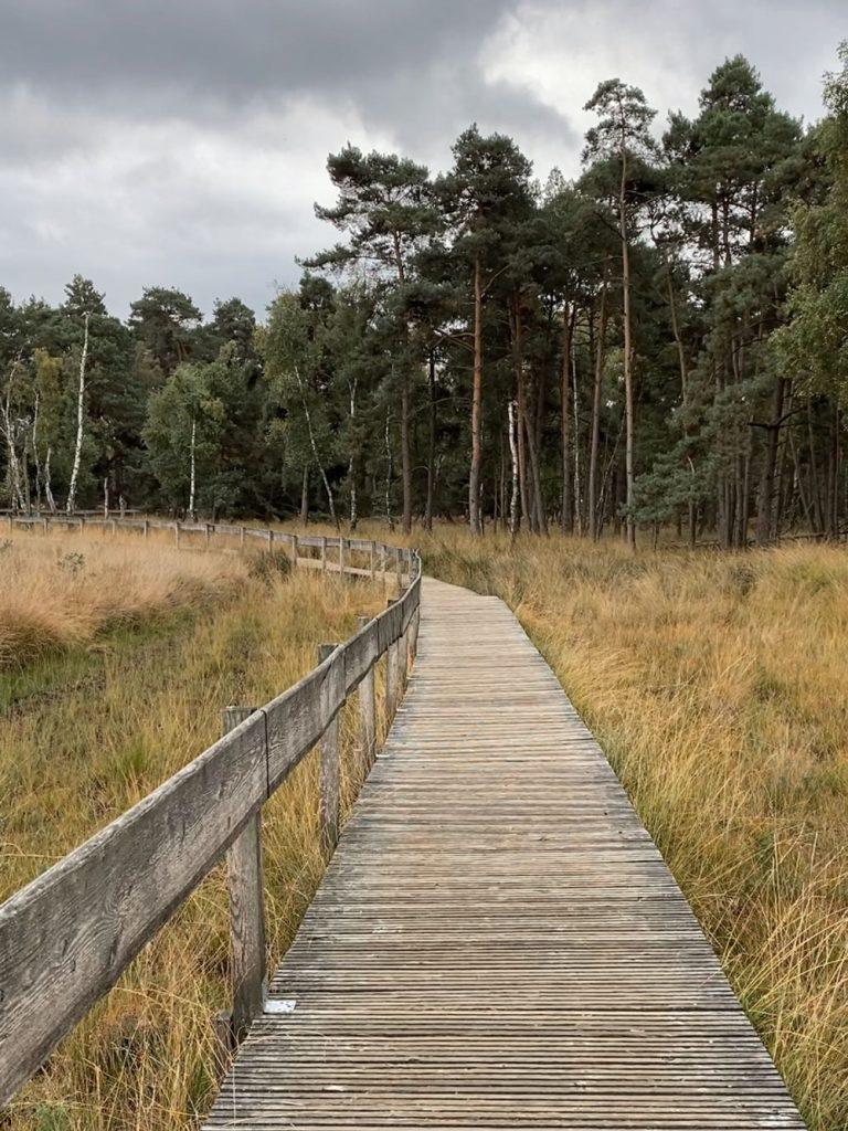 Diersfordter Wald Moorerlebnispfad - Walk and Wonder