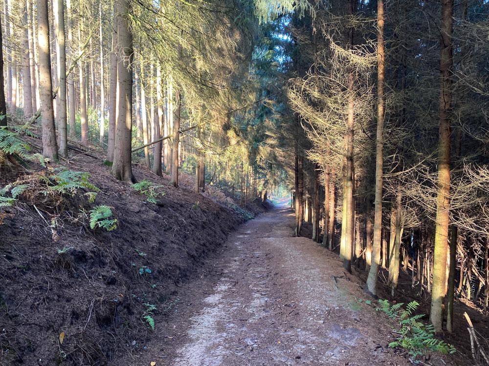 Bergischer Weg Muchensiefen - Walk and Wonder