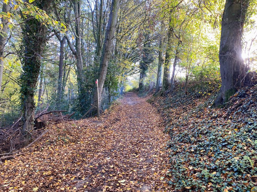 Oberscheid Wanderung im Bergischen Land - Walk and Wonder