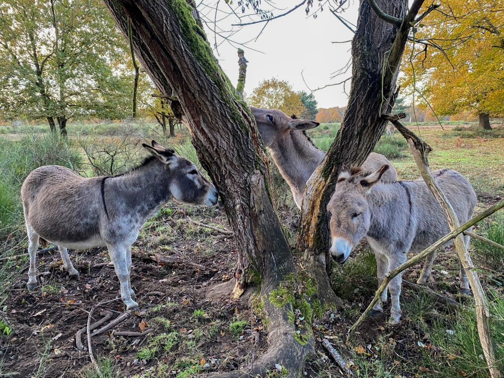 Wahner Heide - Ziegen und Esel - Walk & Wonder