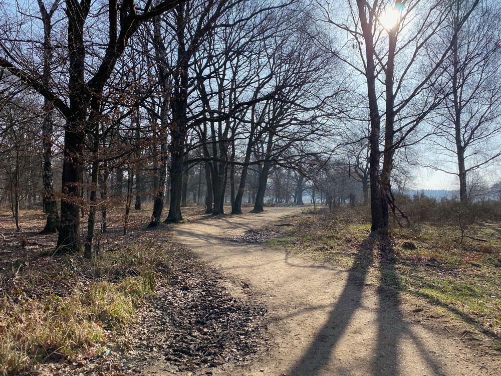 Geisterbusch Tour durch die Wahner Heide - Walk & Wonder