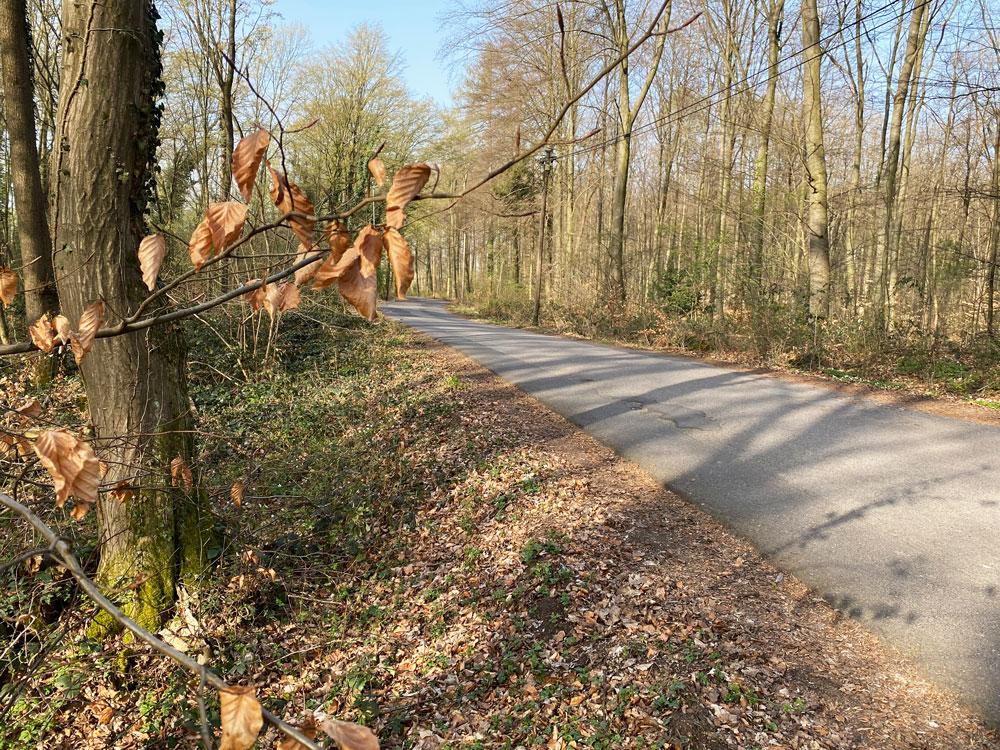 Alter Trassweg Saaler Mühle - Walk and Wonder