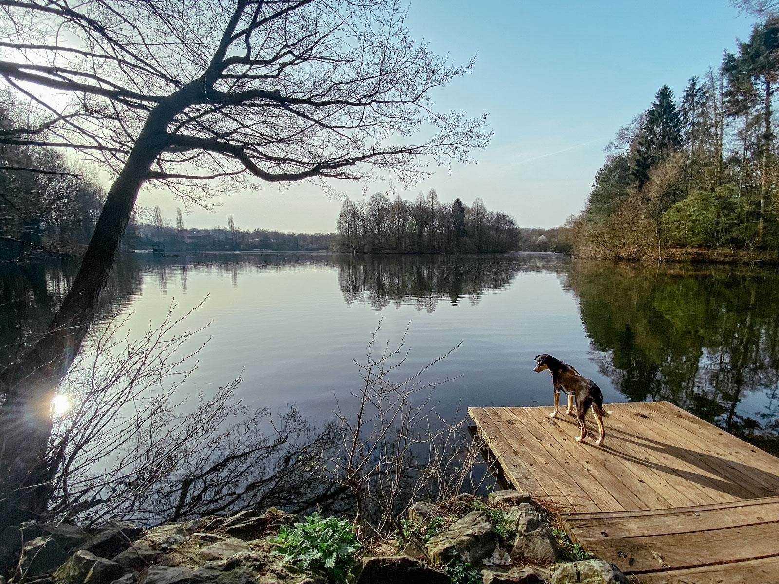 Saaler Mühle - Runde um den See - Walk and Wonder