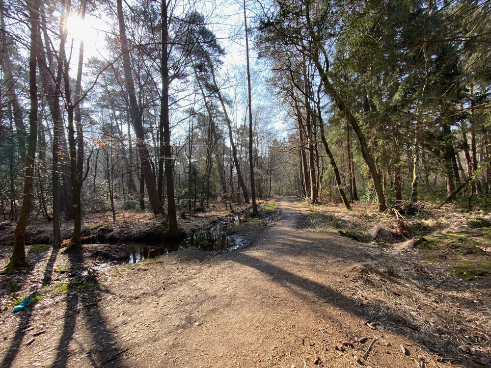 Waldspaziergang Wahner Heide Tipp - Walk and Wonder