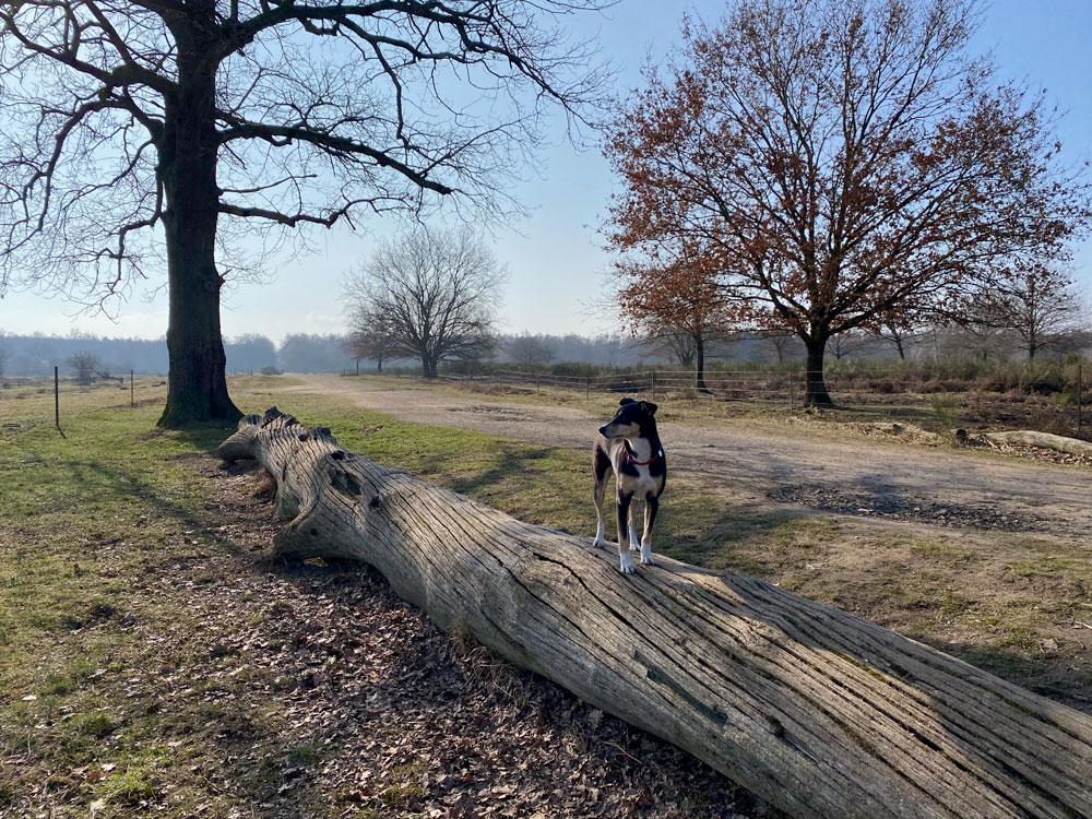 Wahner Heide Spaziergang im Geisterbusch - Walk and Wonder