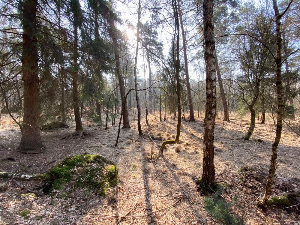 Heide im Wald - Wahner Heide - Walk & Wonder