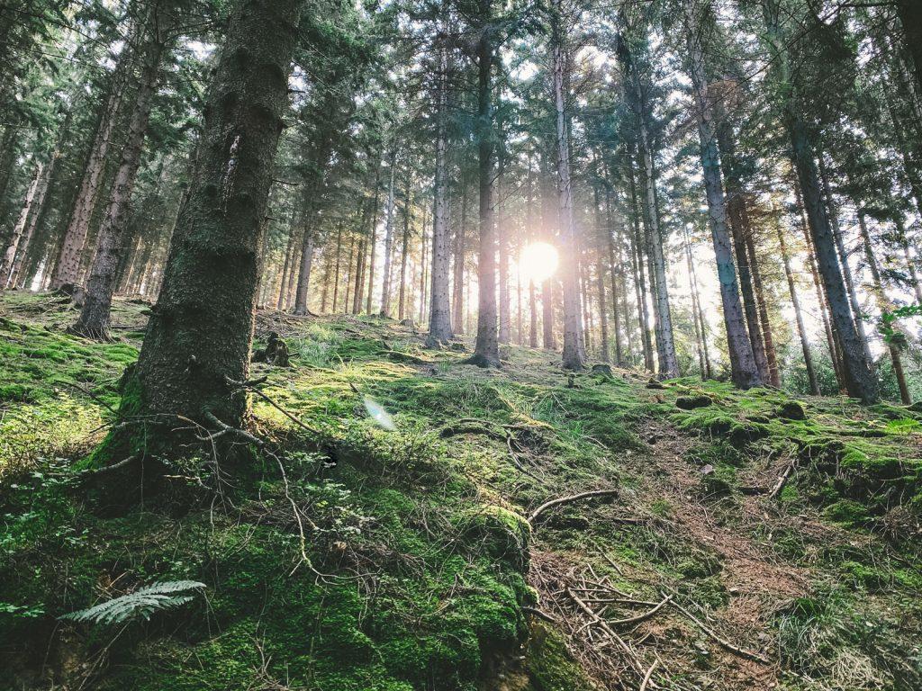 Engelskirchen Wanderung - Walk and Wonder