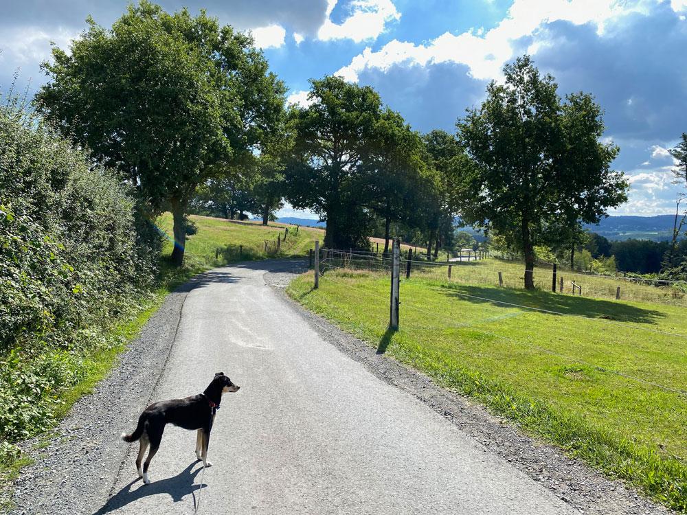 Wanderung in Engelskirchen - Walk and Wonder