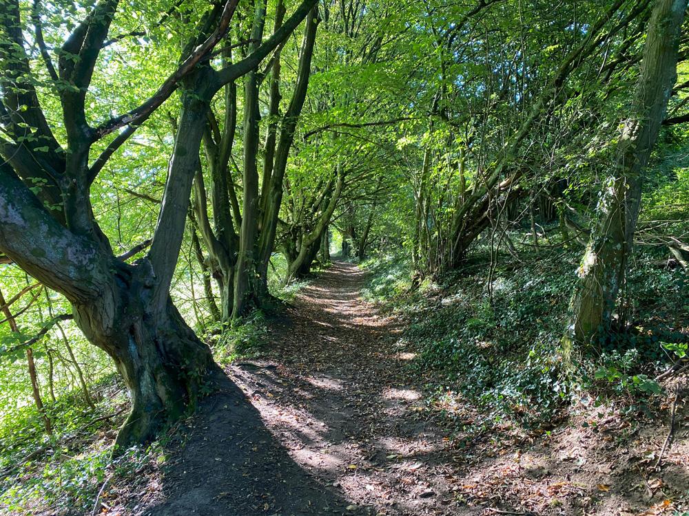 Igeler Hof Wanderung - Walk and Wonder